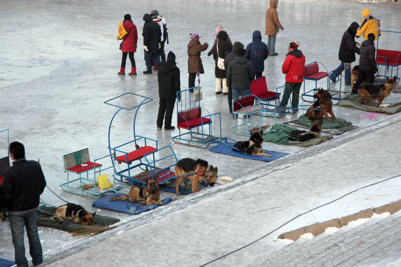 Sled dogs in downtown Harbin, Elijah Wilcott, 2008